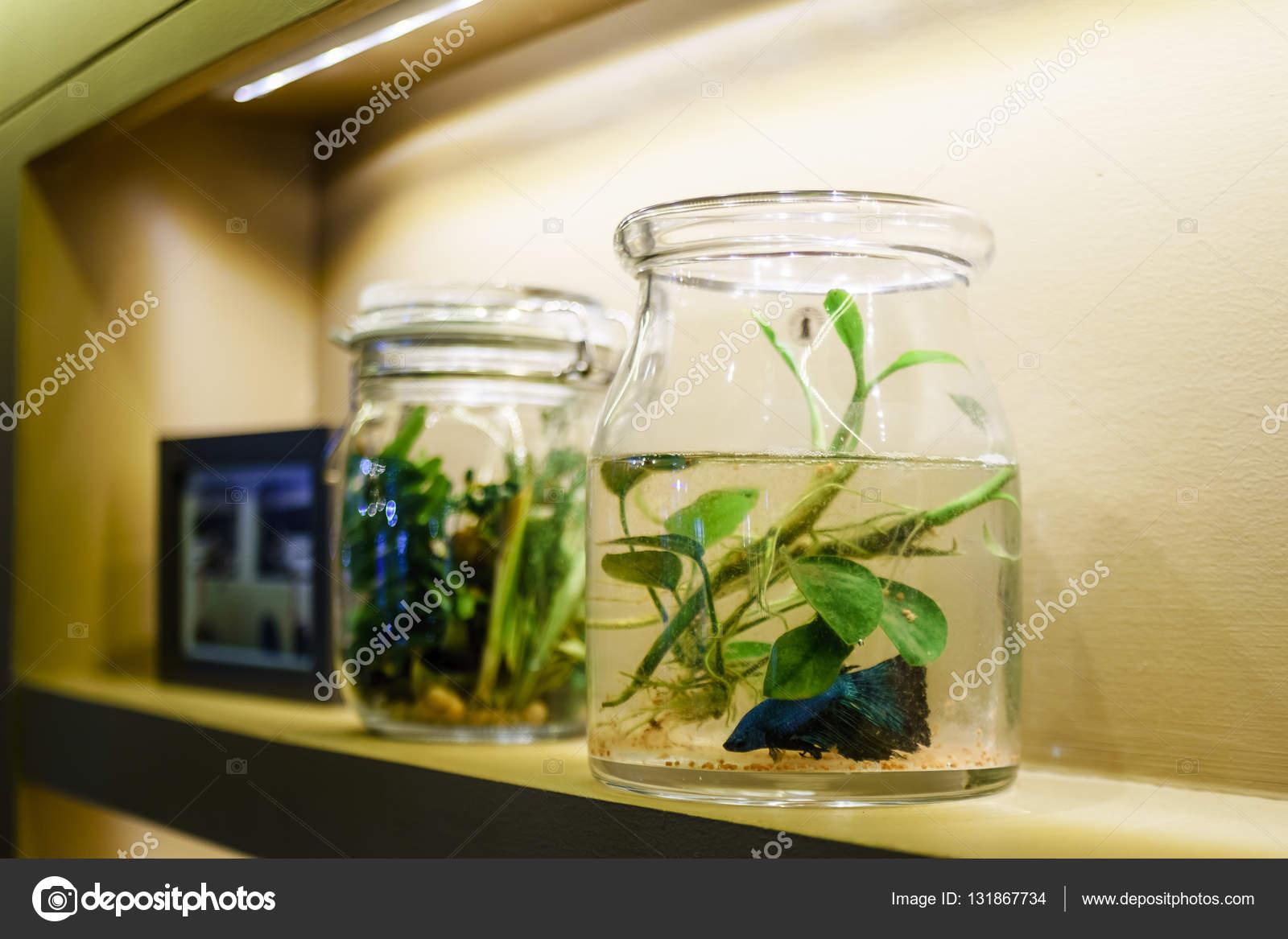 Idee van interieur huis decoratie met betta fish tank decoratie