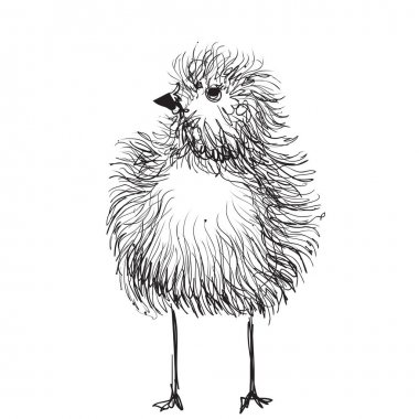Hand-drawn pencil graphics, chicken, chick.