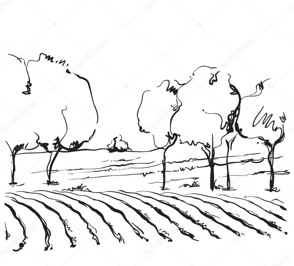 Vineyard landscape vector sketch design.