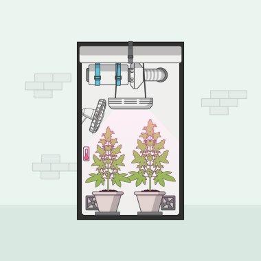 Flat Design of marijuana growing in growbox