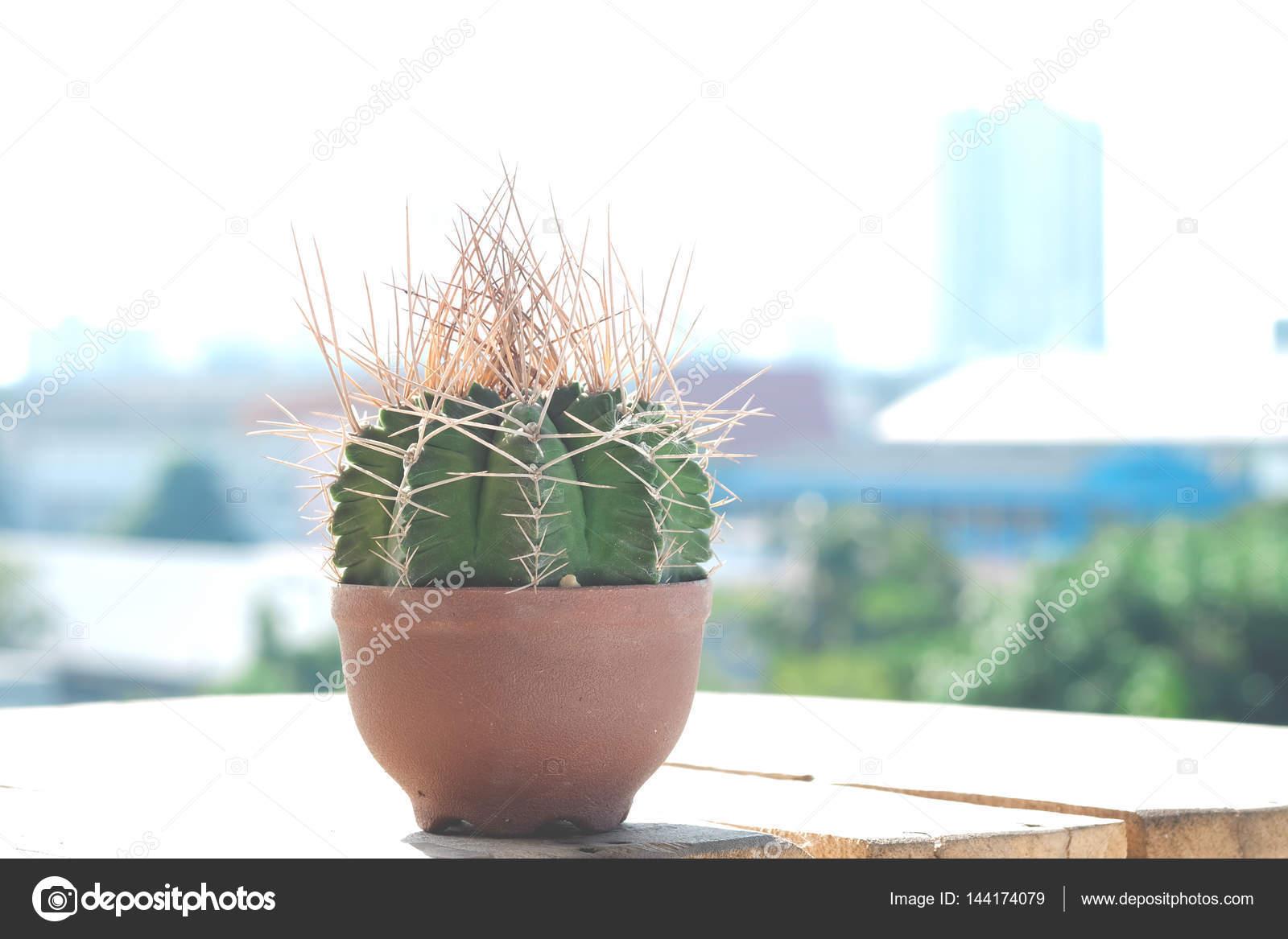 Kunststof Tuin Pot : Kleine cactus in kunststof potten op het terras van een houten vloer