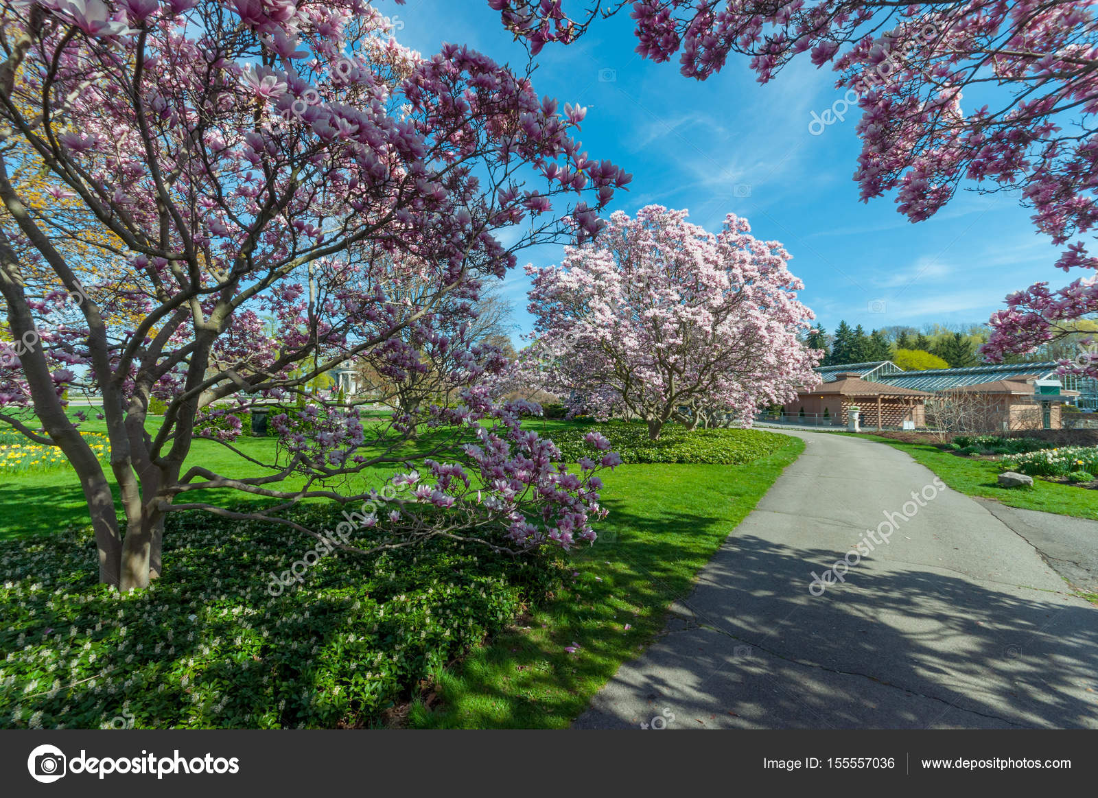 Magnolia Trees in May, Niagara Falls — Stock Photo © pftrip #155557036