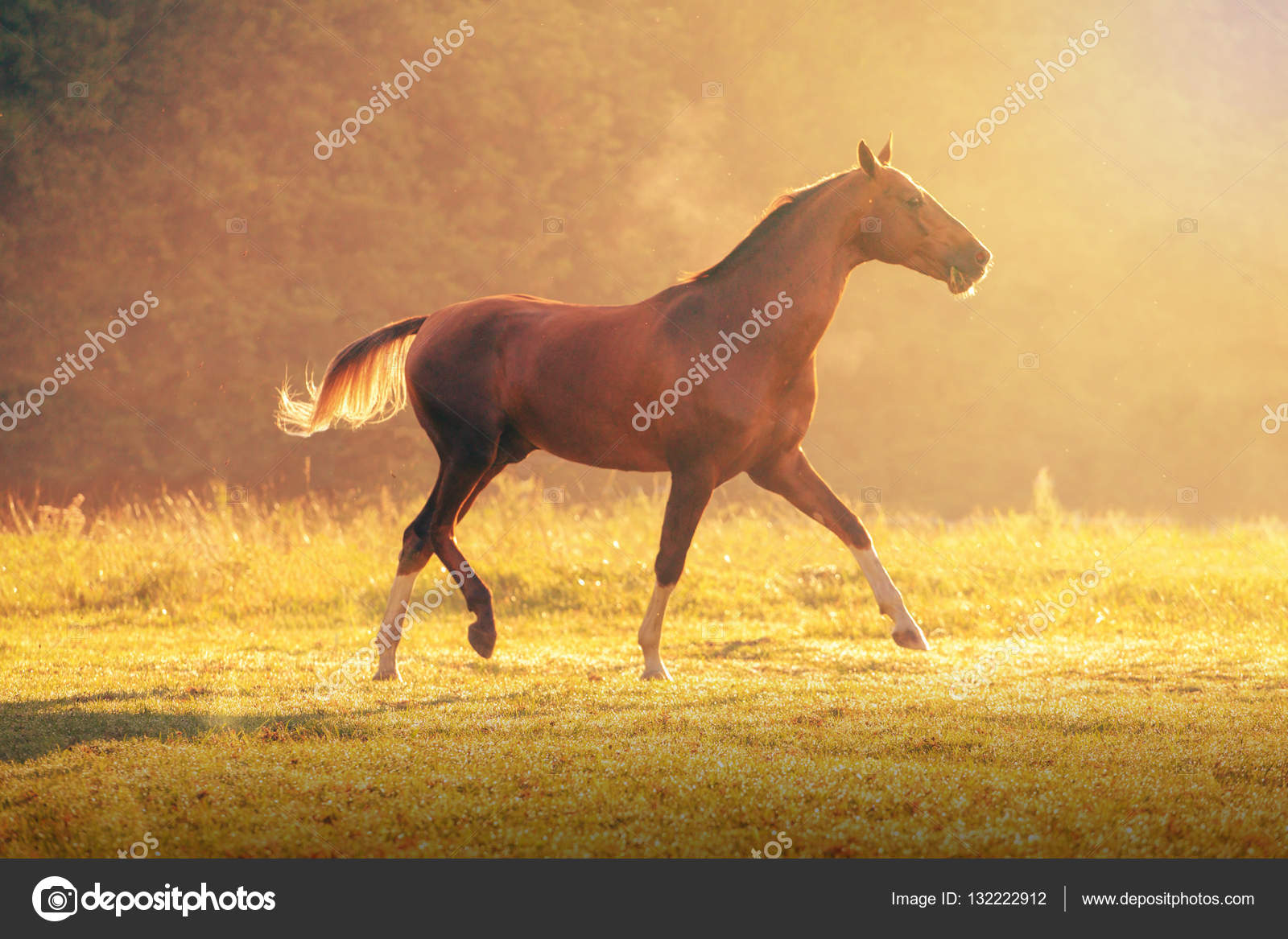 Red Akhal Teke Horse Galloping On The Trees Background At