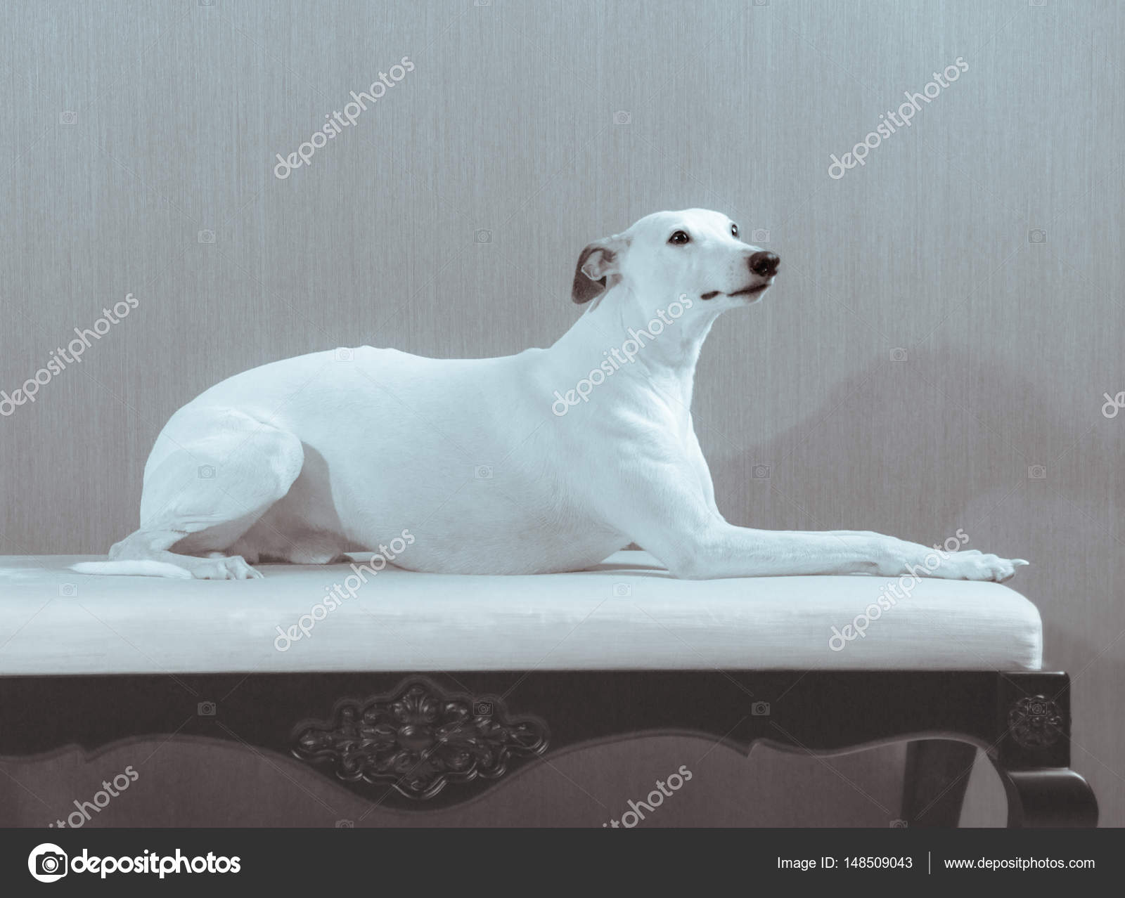 1 Best Of Hund sofa Bilder