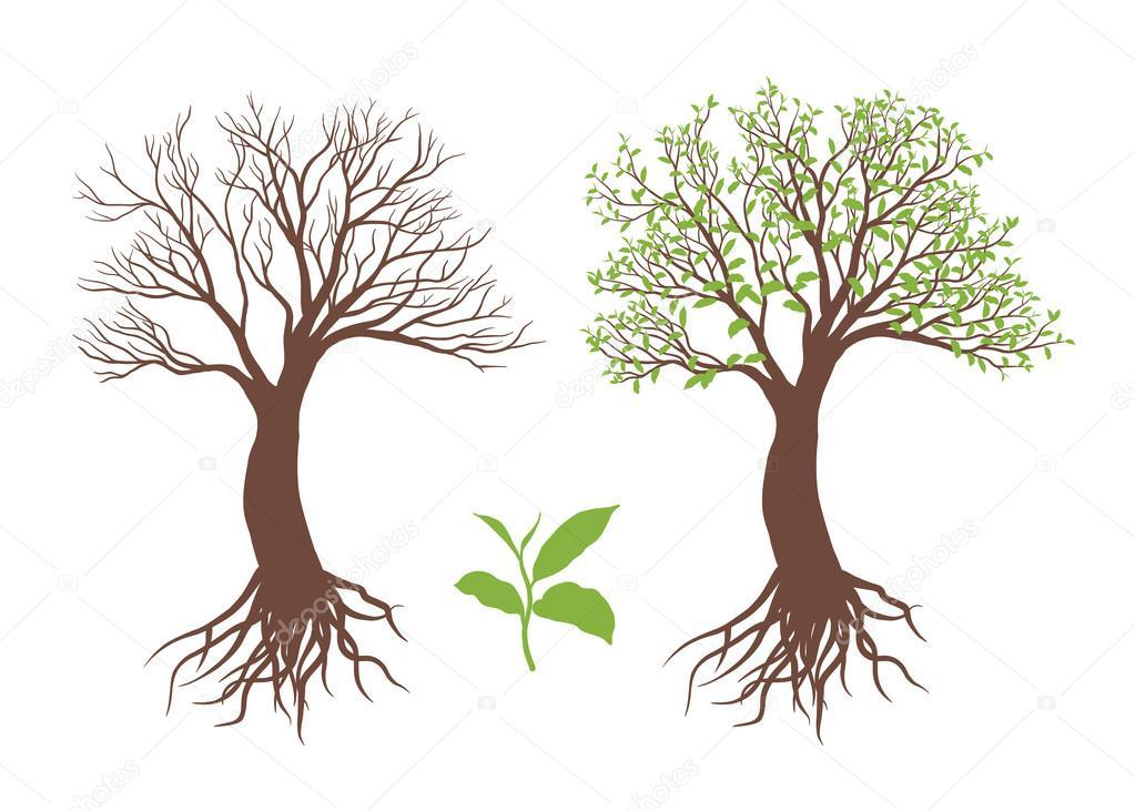 Árbol con raíz y hojas — Vector de stock © pic0bird #125092642