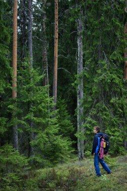 Hiker exploring forest, Karelian pine forest, Scandinavia.