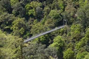 suspension bridge in forest