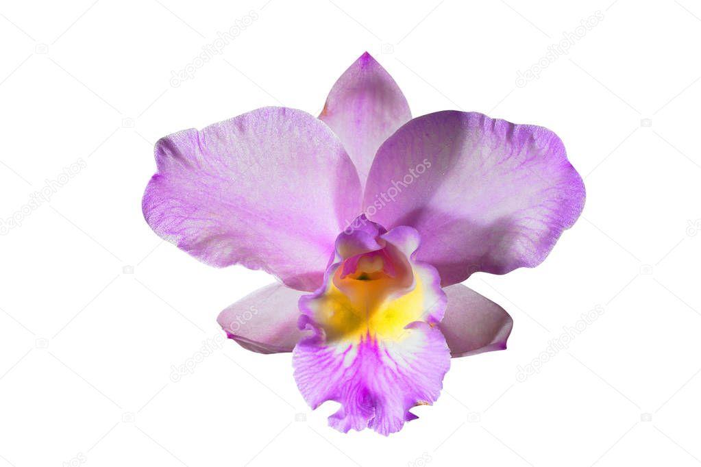 sch ne orchidee blume nahaufnahme stockfoto topphoto 157175232. Black Bedroom Furniture Sets. Home Design Ideas