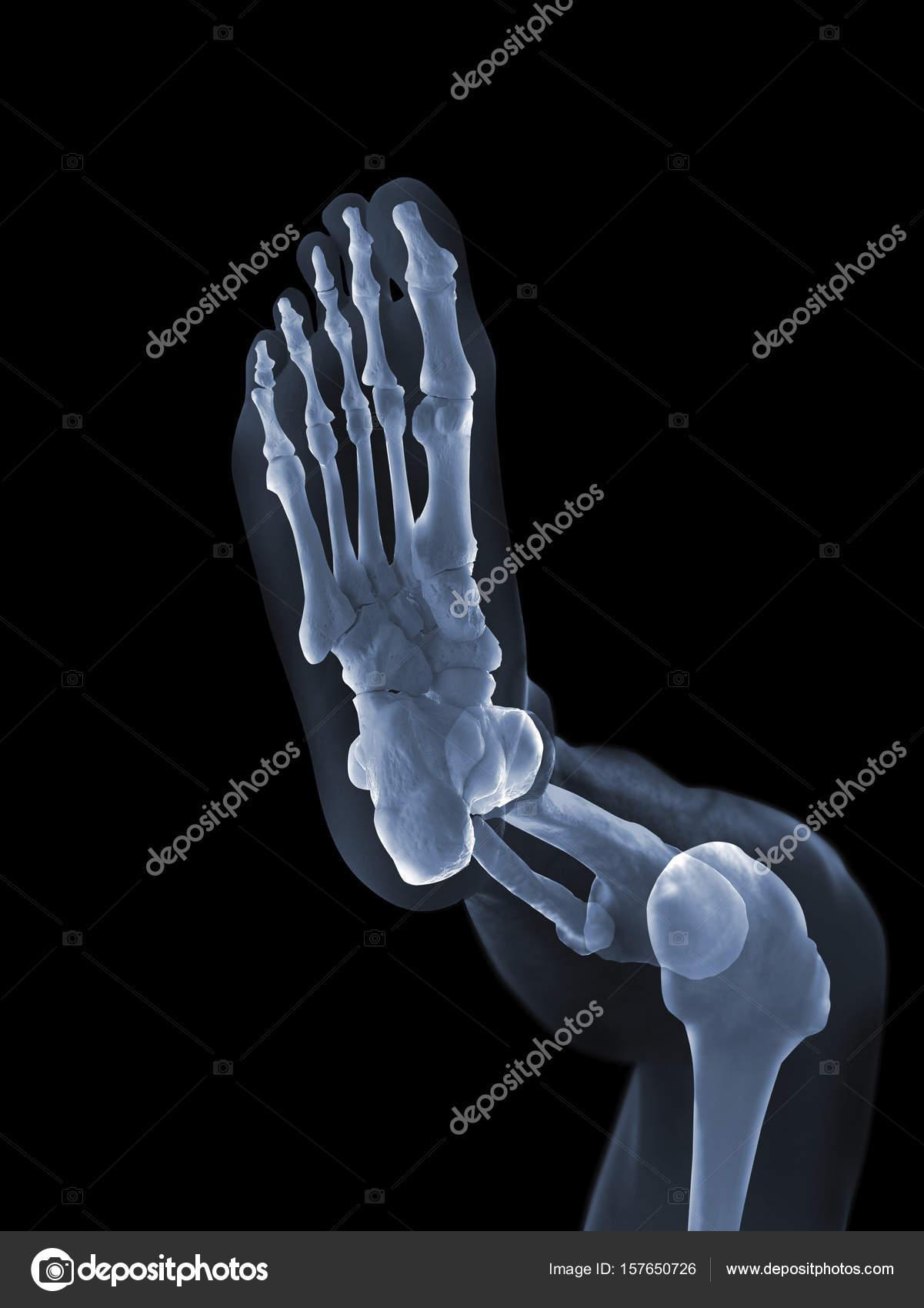 X-ray anatomy Concept — Stock Photo © topphoto #157650726