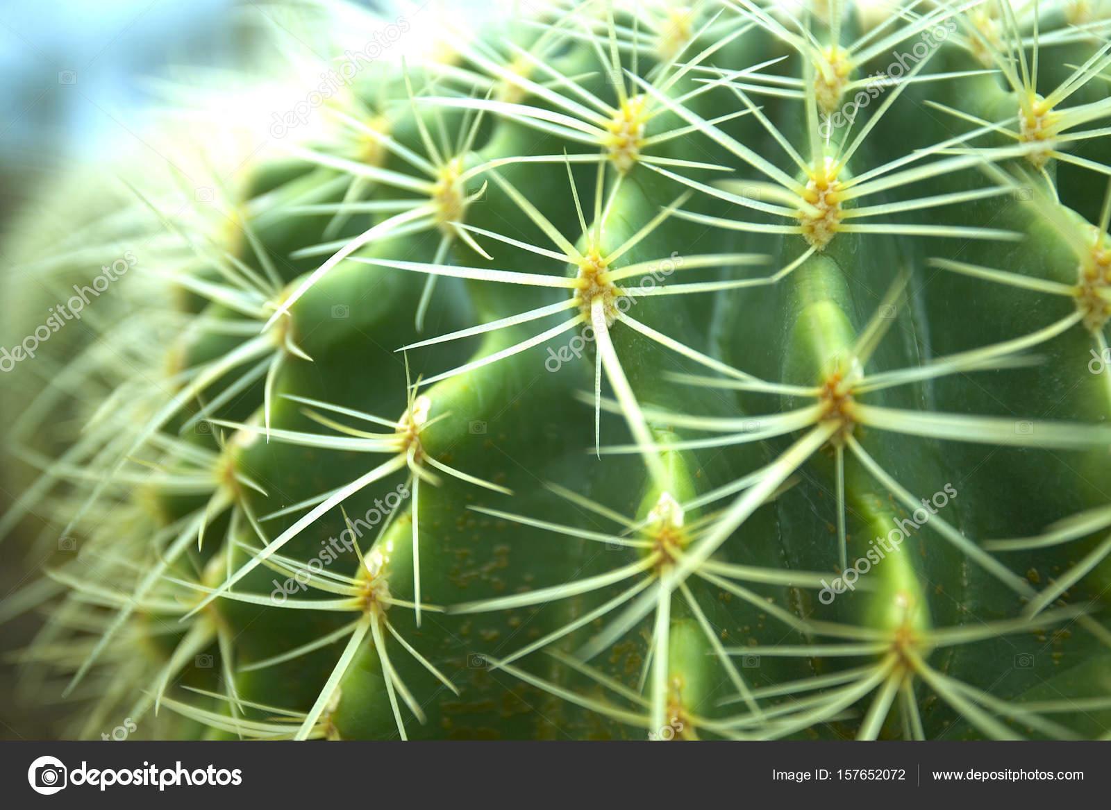 Cactus Seco Con Agujas Foto De Stock C Topphoto 157652072 - Cactus-seco