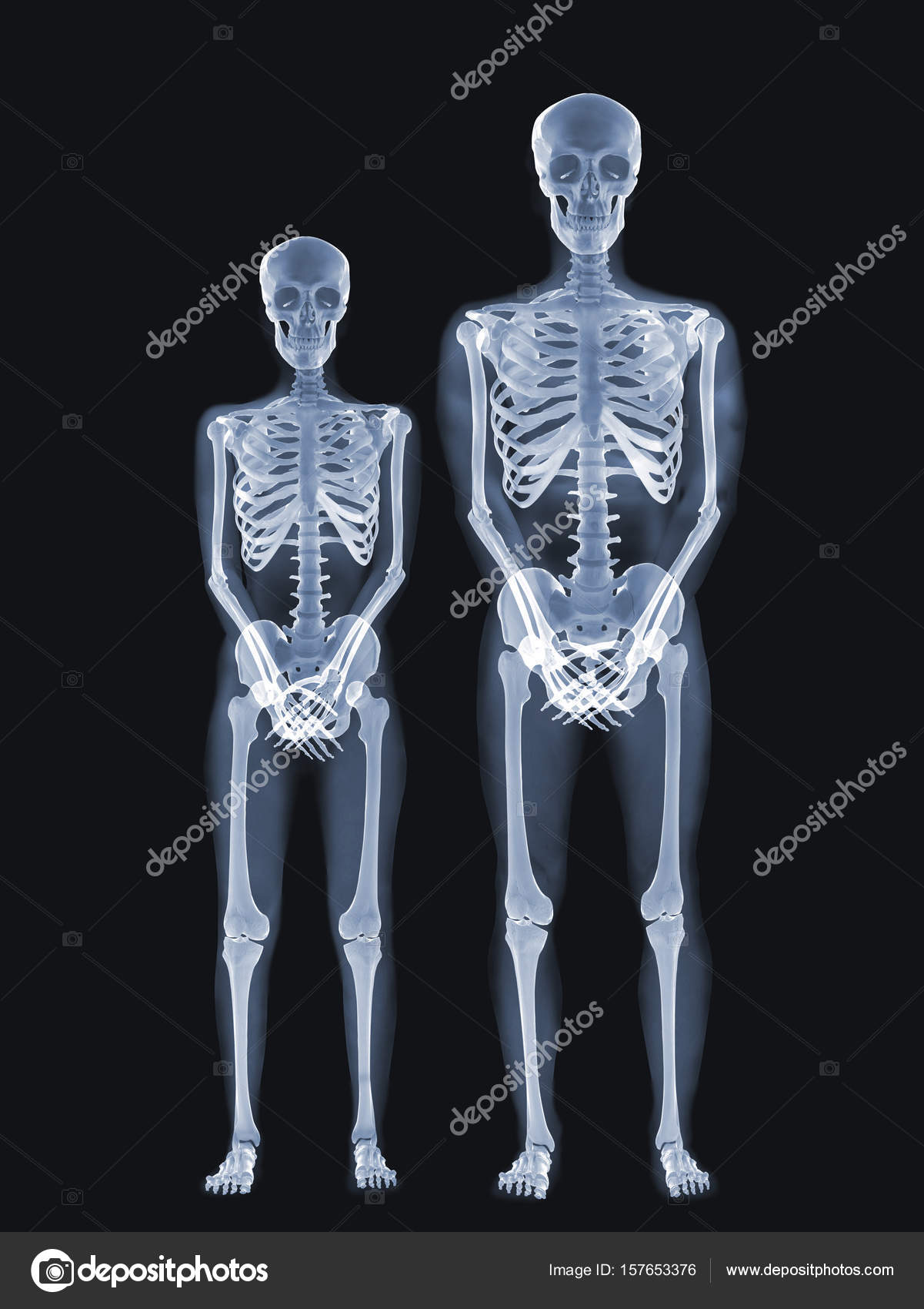 X-ray anatomy Concept — Stock Photo © topphoto #157653376
