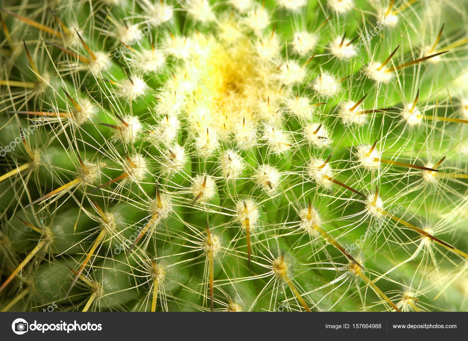 Cactus seco con agujas Foto de stock topphoto 157664988