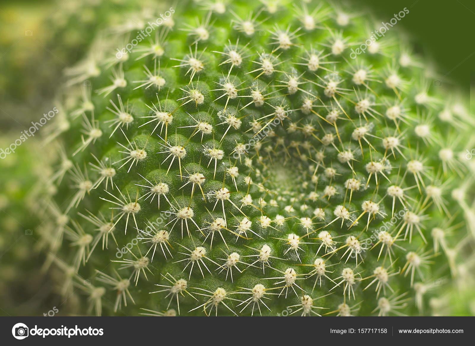 Cactus seco con agujas Fotos de Stock topphoto 157717158