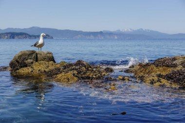 Seagull on marine background. Nature landscape