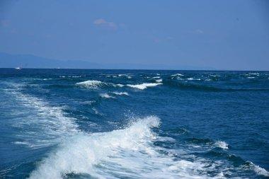 sea coastline at daytime