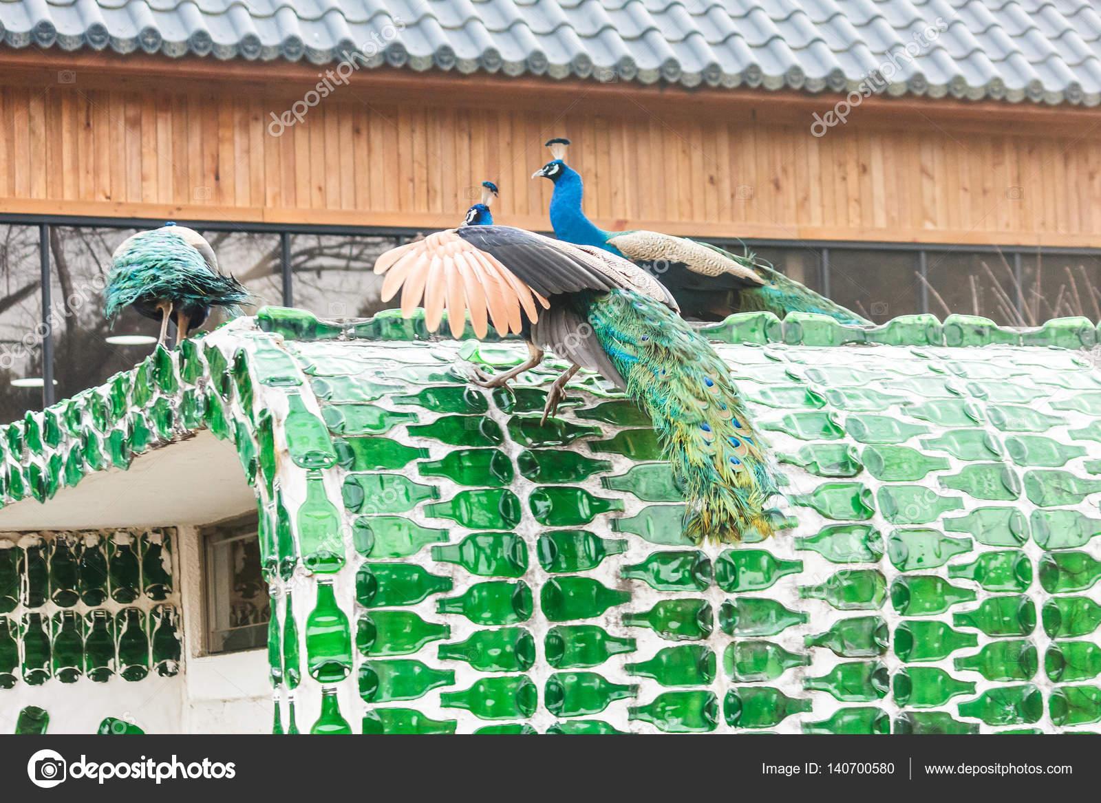 Pavo real en la isla de Nami en Corea del sur — Fotos de Stock ...