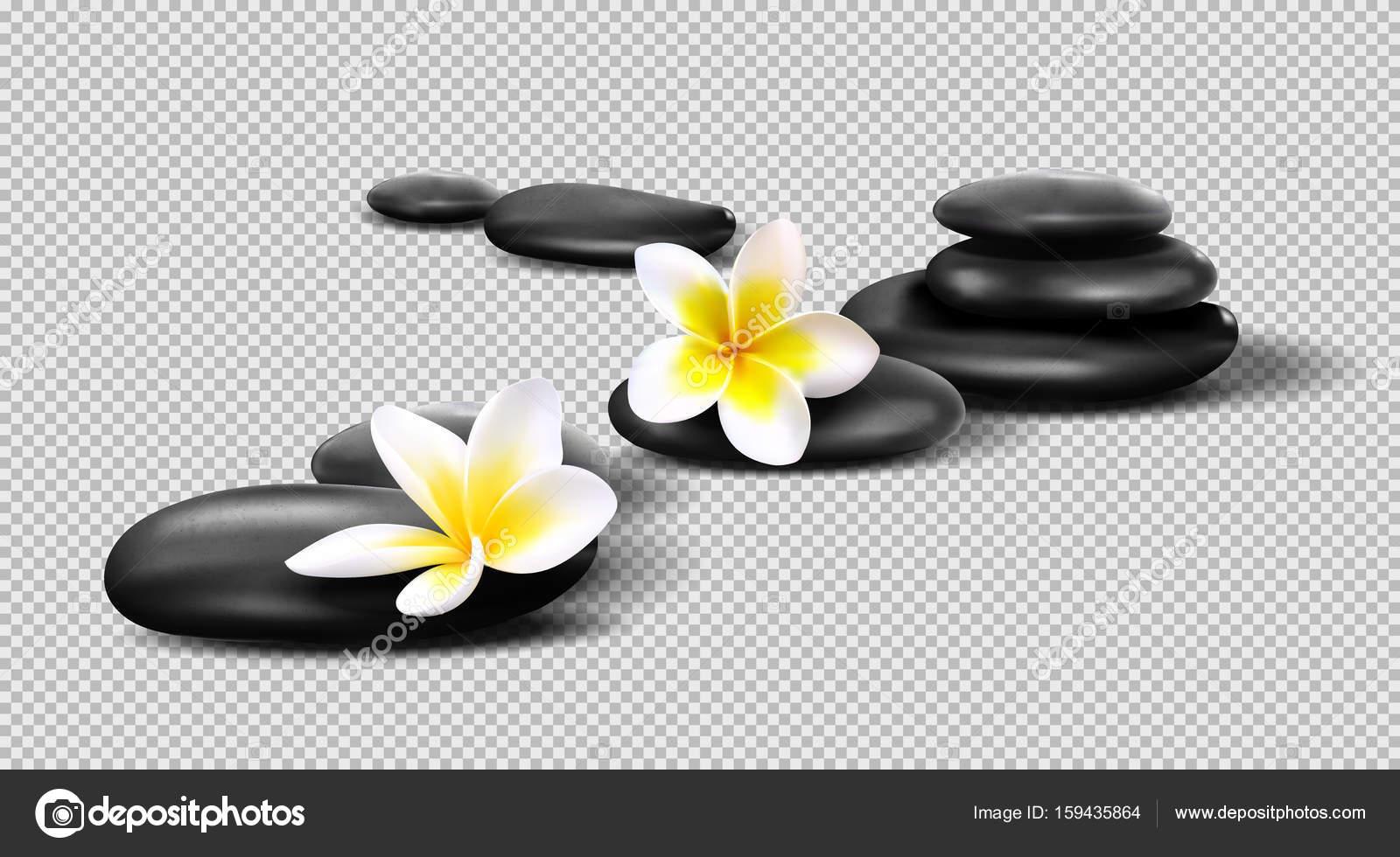 Flores Vectoriales Con Fondo Transparente: Cálculos Realistas De Vector Sobre Fondo Transparente
