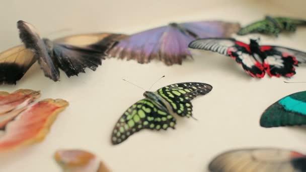detail z krásných barevných motýlů na stole