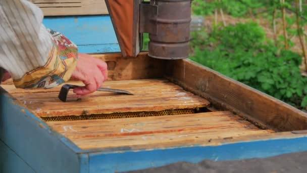 Detail včelaře drží voštiny s včely v zahradě