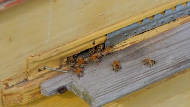 detail z úlu s medem a včely v zahradě