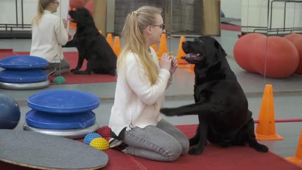 Kıza teklif köpek ona bir pençe vermek