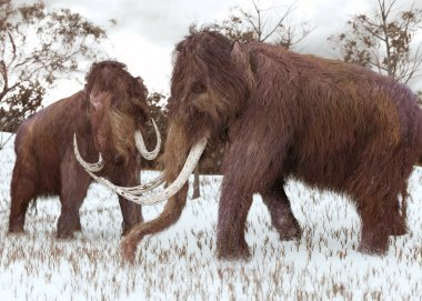 Woolly Mammoths Grazing In The Snow