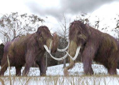 Woolly Mammoth Clones