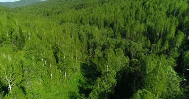 Let nad březový les