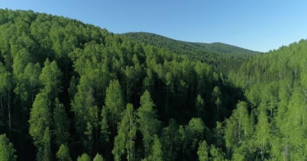 Hory pokryté březový les