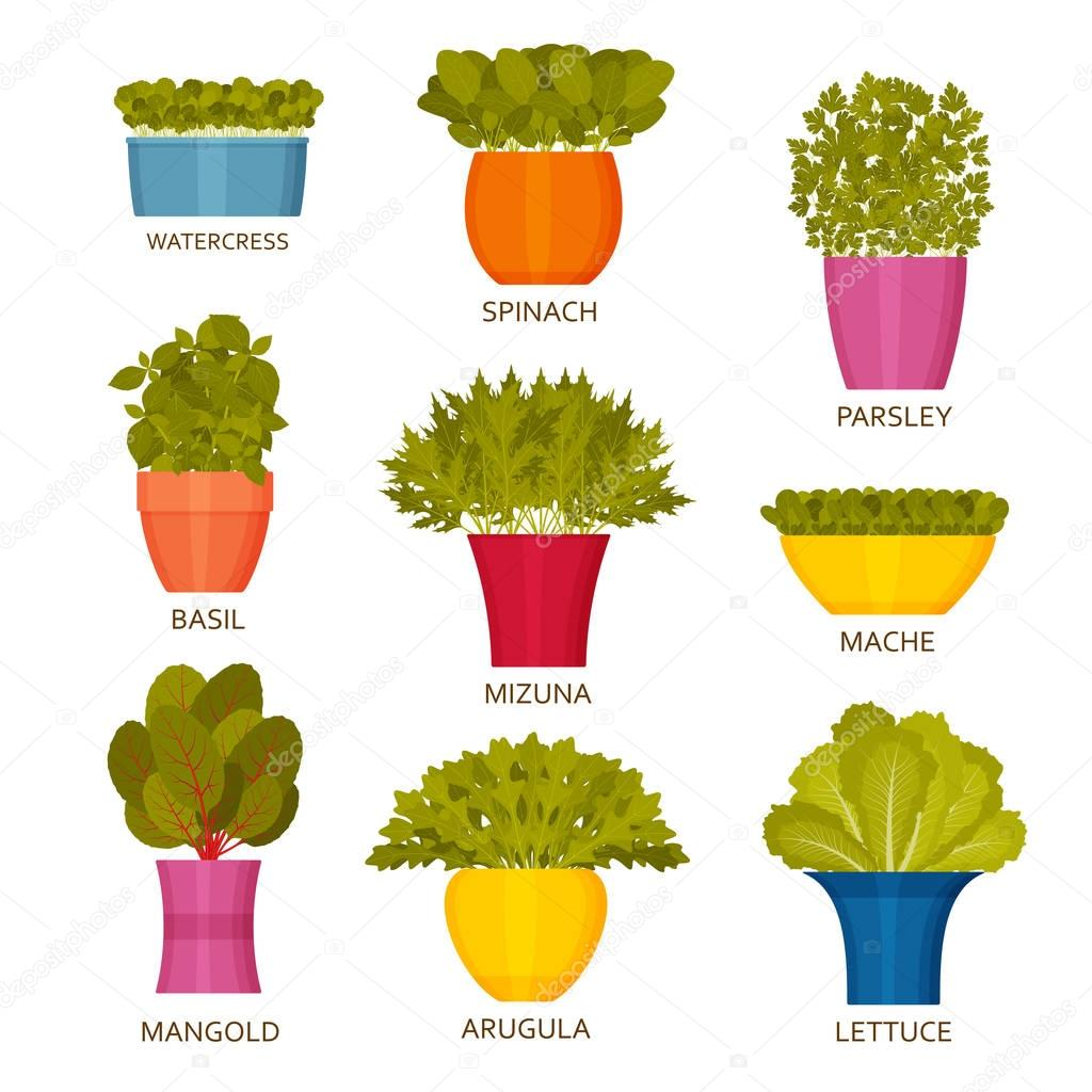 Indoor gardening icons with lettuce