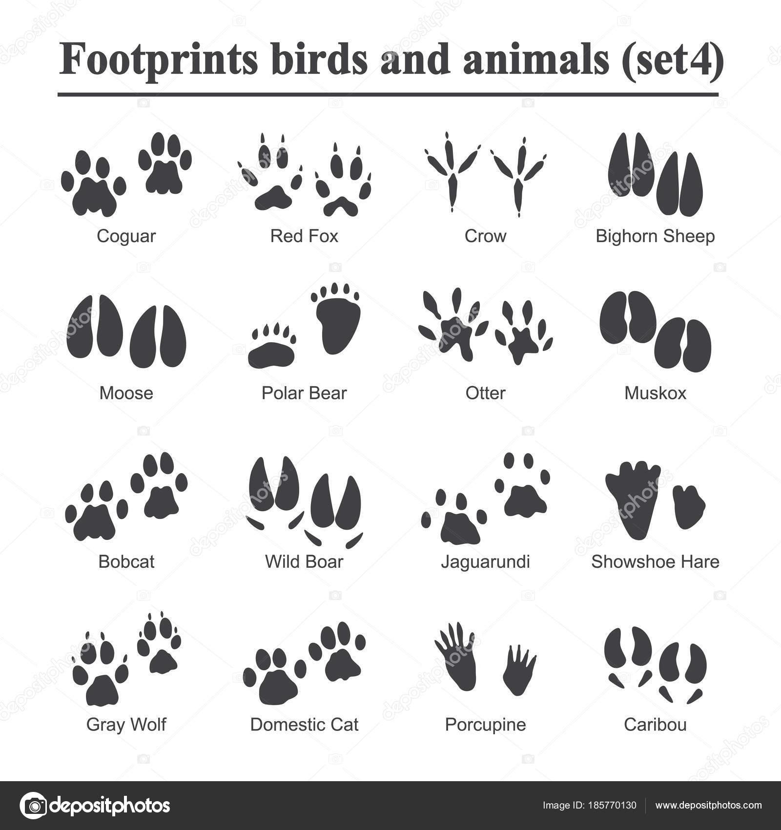 tiere tiere und vögel fußabdruck, druckt tier pfote vektor-set