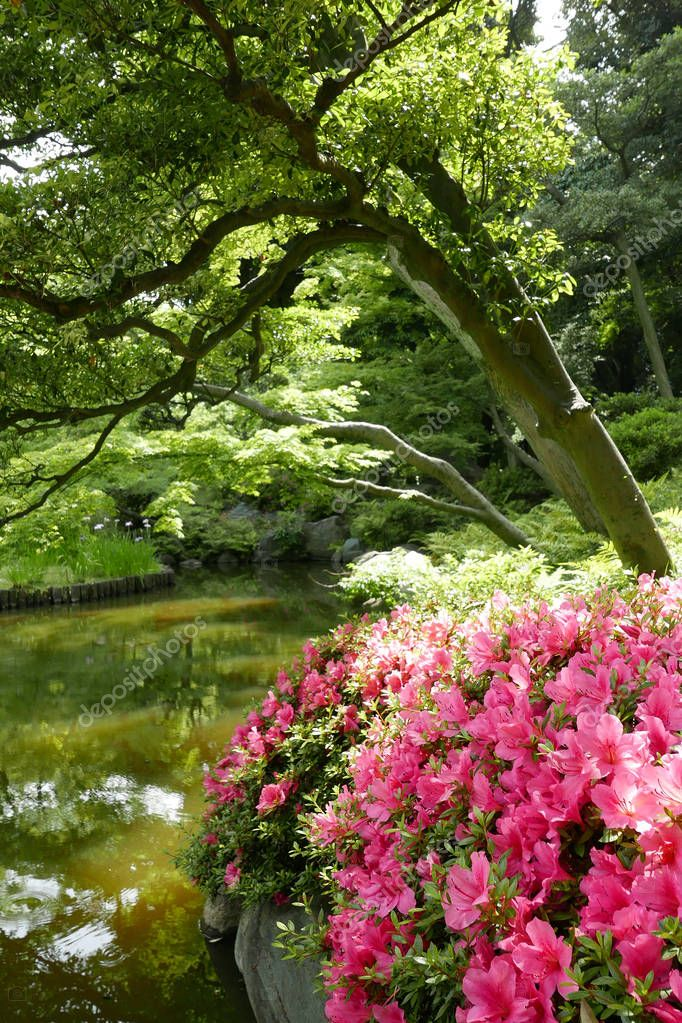Vertical green plants and pink flower in Japan private zen park