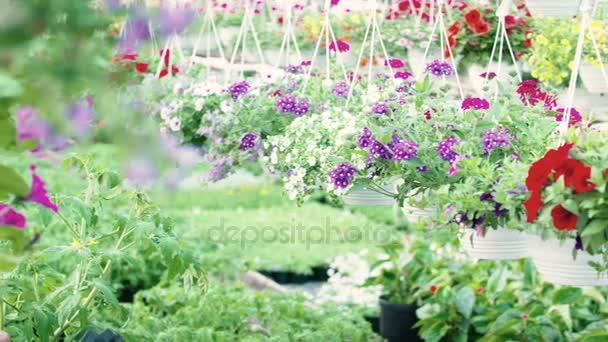 Záběrem na květ rostlin