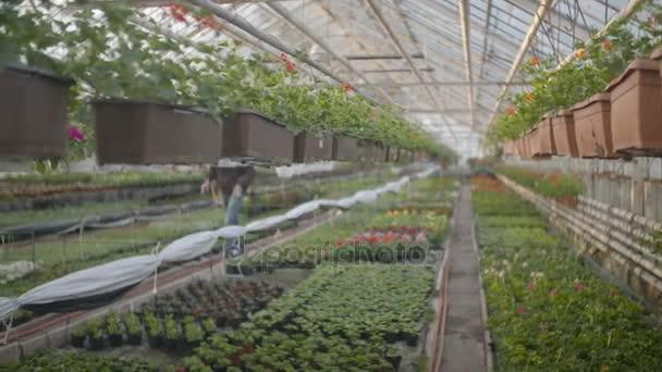 Dělník, zalévání květin v rozlišení 4k
