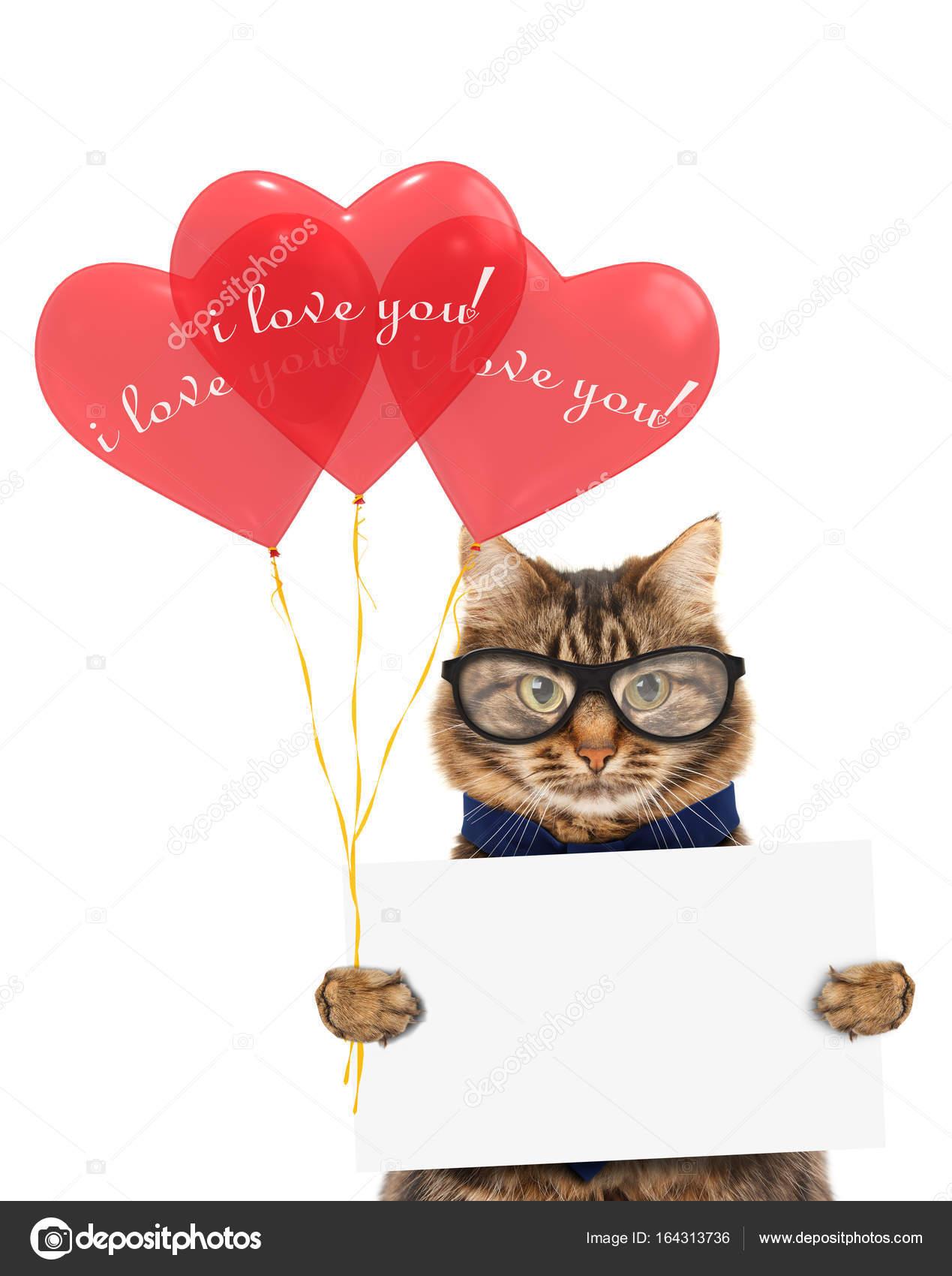 Lustige Katze Mit Geschenken Und Rote Luftballons Happy