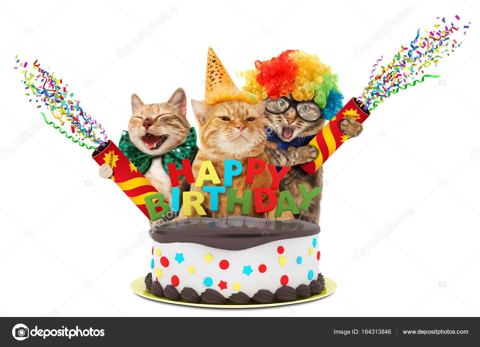 a2ef2fc6b1ab Αστείες γάτες με παγίδα και γενέθλια τούρτα. Που φοράνε τα γιορτινά ρούχα