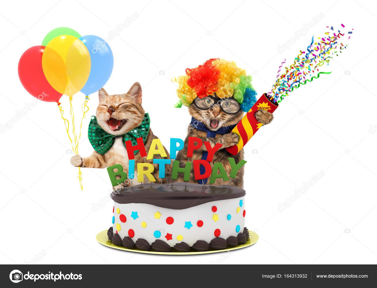 śmieszne Koty Z Petard I Urodzinowy Tort One Mają Na Sobie Ubrania