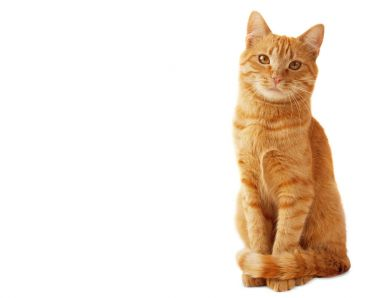 Portrait of red cat isolated on white background.