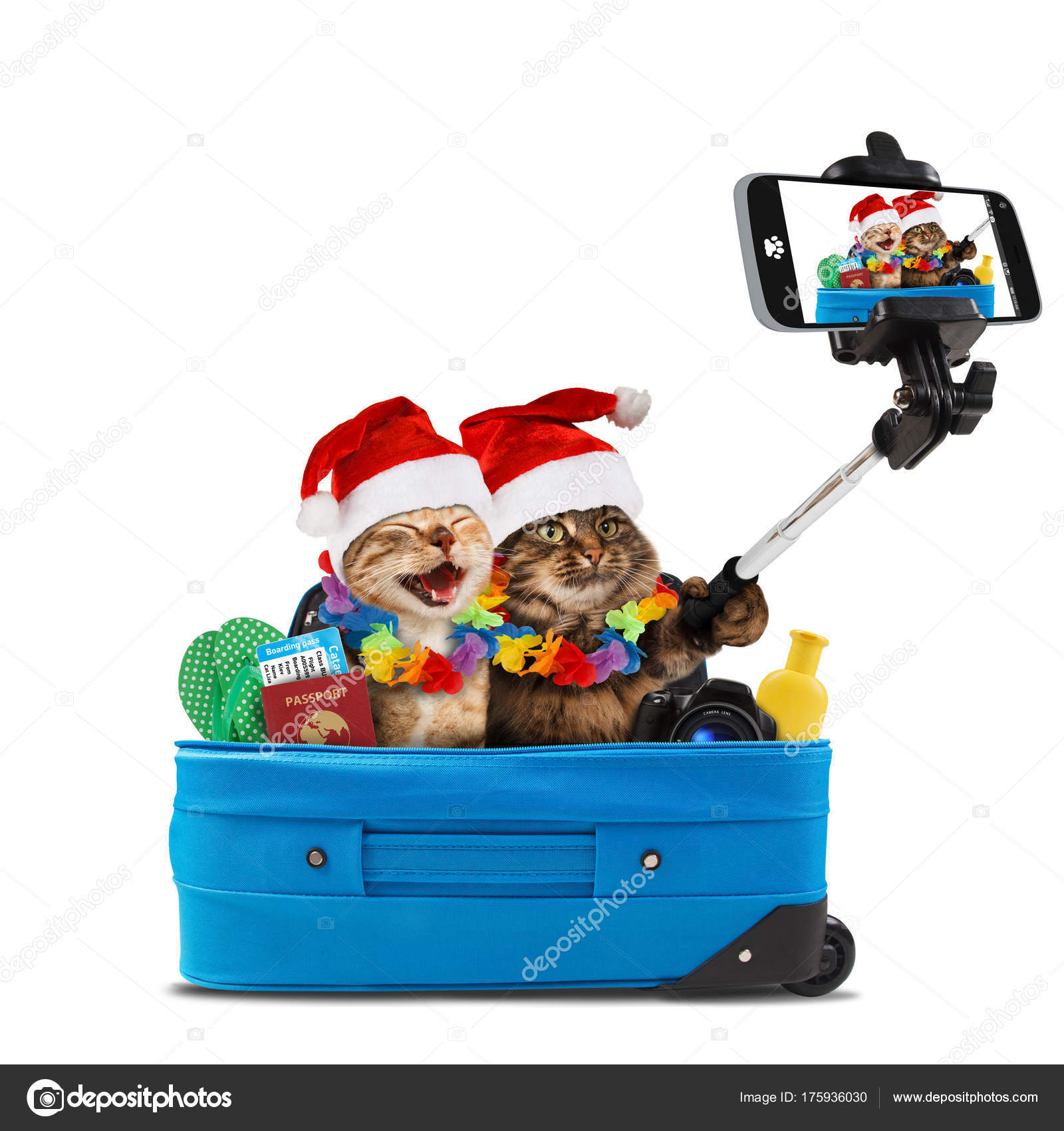 Funny Cats Taking Selfie Smartphone Camera Going Vacation Subject Travel Stock Photo