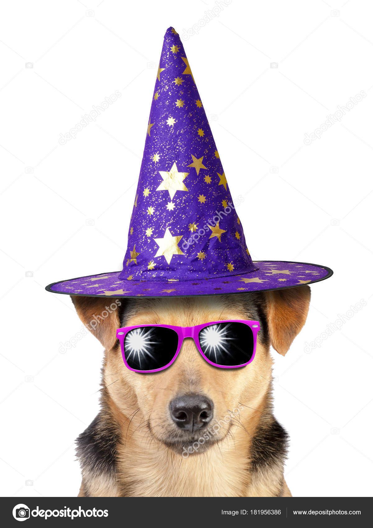 Halloween perro bruja o mago sombrero divertido usar gafas de sol ...