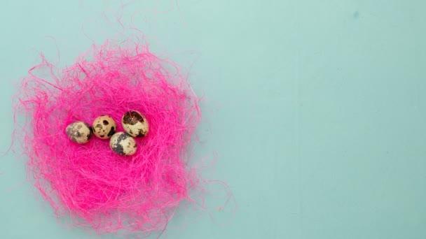 Velikonoční křepelčí vejce v růžovém hnízdě na modrém pozadí. Peří padá na stůl, zastavit pohyb, 4k. Velikonoční sváteční dekorace