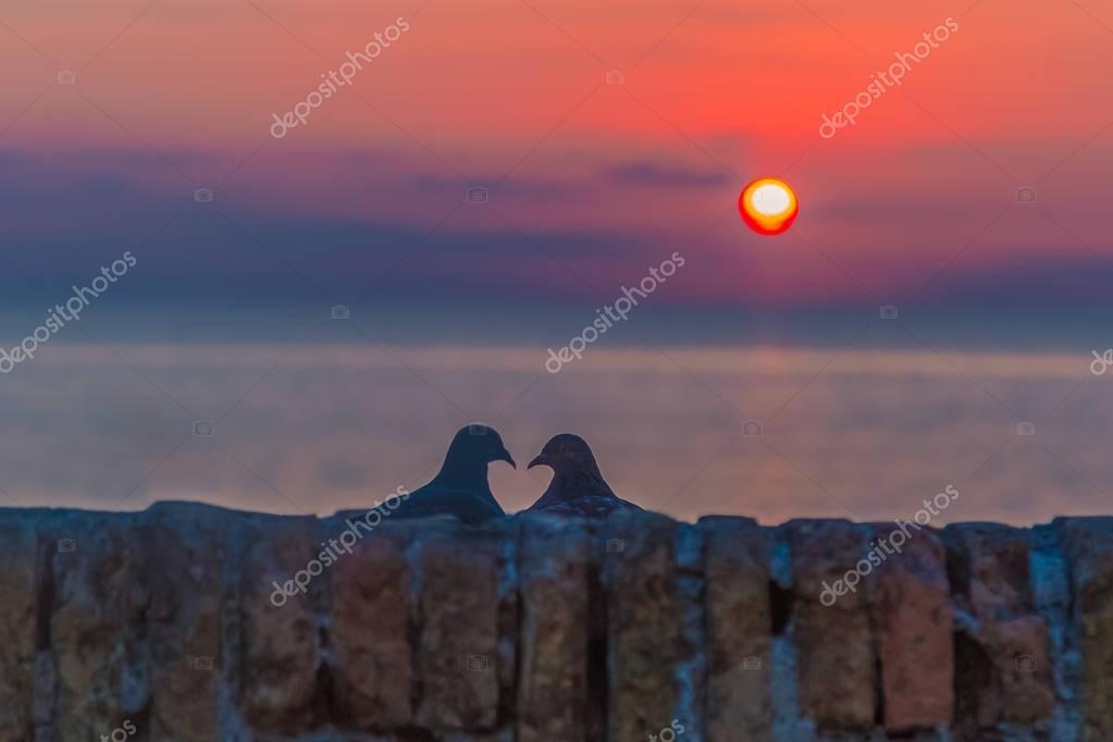 Lovebird silhouette at sun rise
