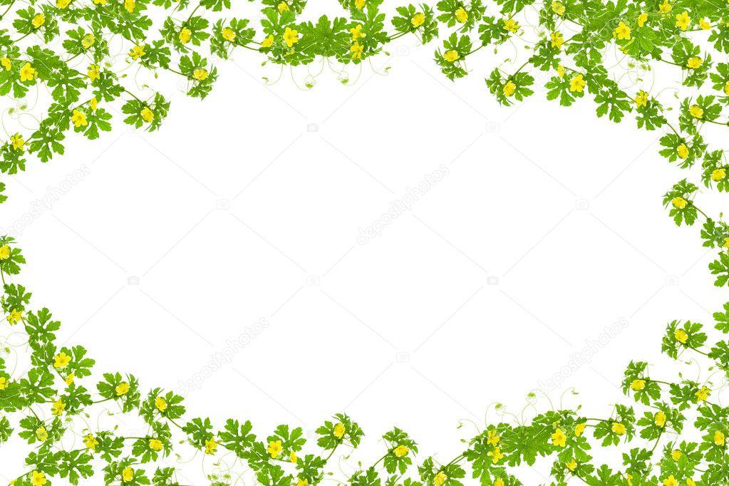 Hojas de color verde con marco de flor amarilla, aislado en blanco ...