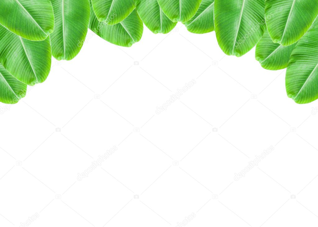 Banana Leaf frame on white background. — Stock Photo © panya9966 ...