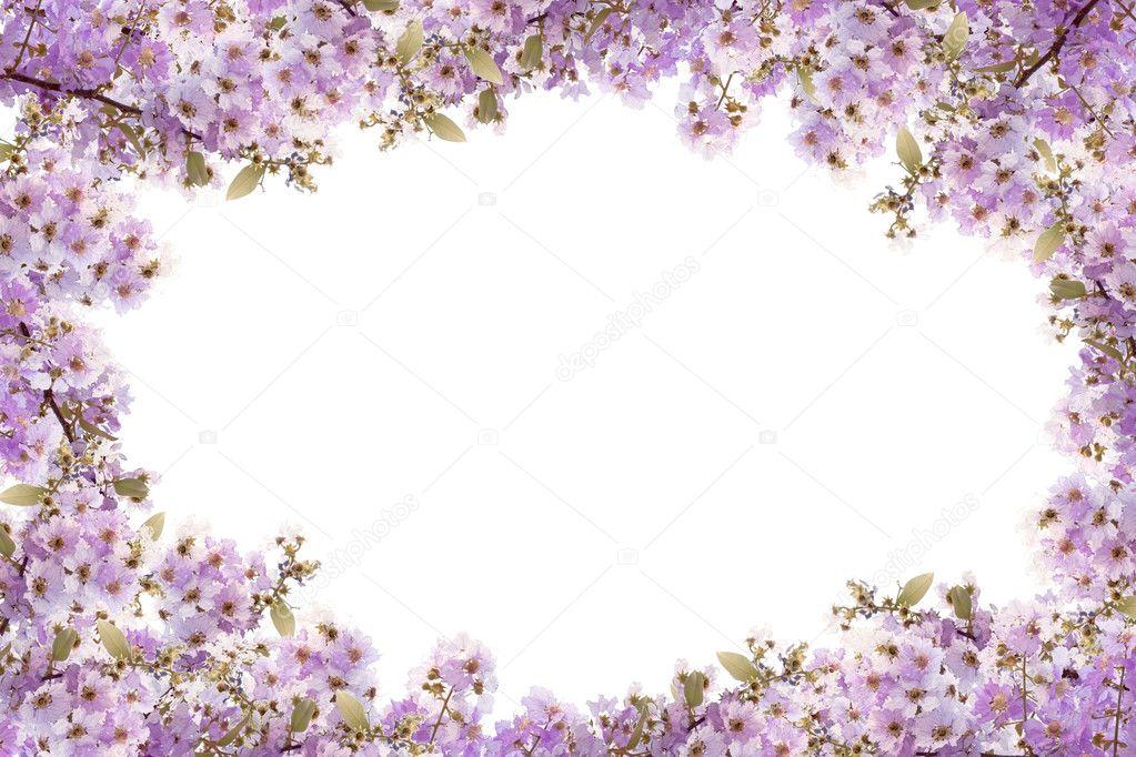 Marco de la hermosa flor de color púrpura sobre fondo blanco — Fotos ...