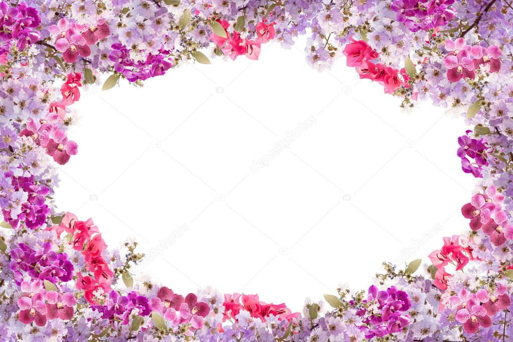Marco de la hermosa flor de color púrpura sobre fondo blanco — Foto ...