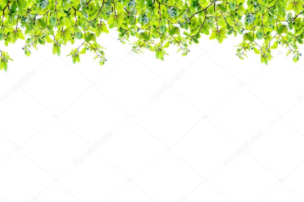 marco de hojas verdes aislada sobre fondo blanco, Resumen de la ...