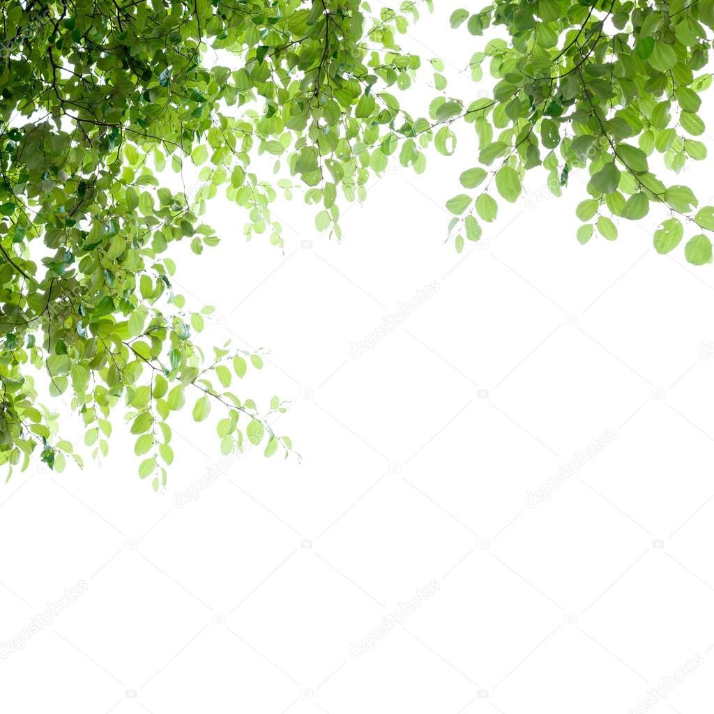 Marco de hermosas hojas verdes aislada en blanca, Resumen de la ...