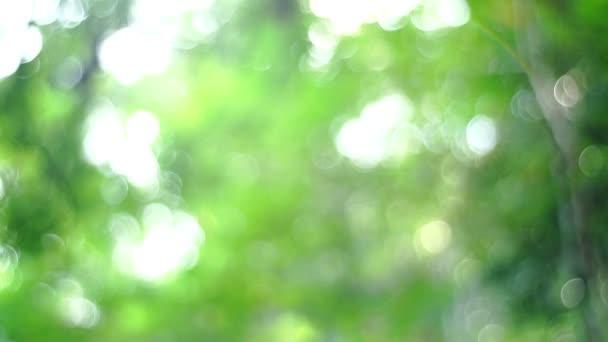 Krásná krásná rozmazaná příroda zelená bokeh sluneční svit s jasným slunečním paprskem a sluneční erupce svícení příroda zelená bokeh slunce s jasným slunečním paprskem a sluneční erupce