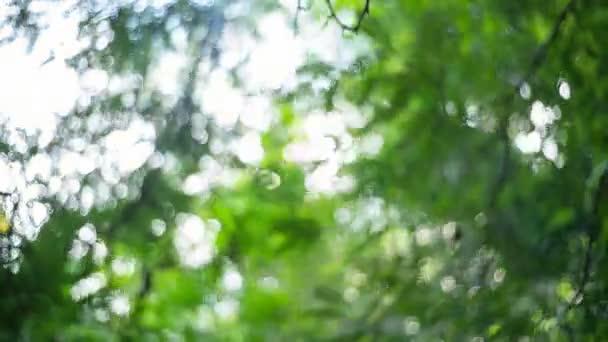 Gyönyörű homályos természet zöld bokeh napsütés fényes napsugárral és napkitörés fény